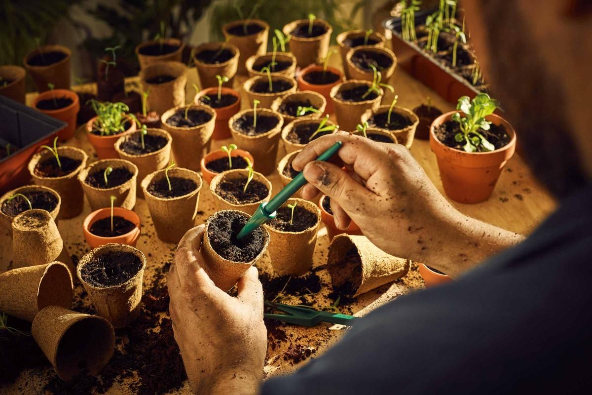 Pflanzen ziehen mit FloraSelf