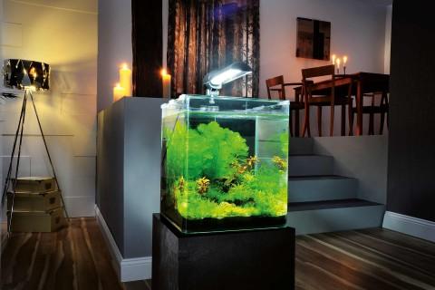 Aquarium / Aquaristik und Zubehör - jetzt bei HORNBACH Österreich online kaufen