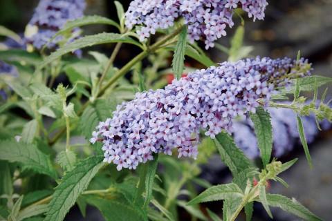 Freilandpflanzen und Heckenpflanzen jetzt bei HORNBACH Österreich online kaufen!