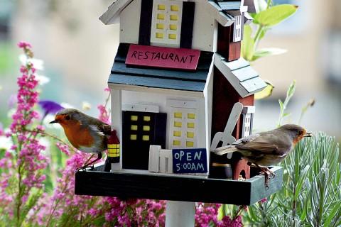 Vogelfutter jetzt bei HORNBACH Österreich online bestellen!