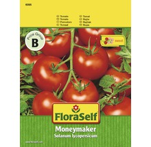 Tomatensamen FloraSelf 'Moneymaker'