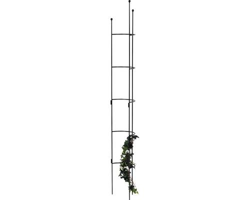 Halbrundspalier Cosmea L 180x26,5x14 cm anthrazit-metallic