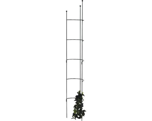 Halbrundspalier Cosmea L 180x26,5x14 cm oxford-grün