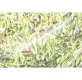 Kirschessigfliegen-Netz FloraSelf 4 x 5 m