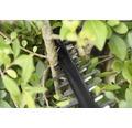 Akku-Heckenschere BOSCH AHS 55-20 Li Inkl. Handschuhe, Schutzbrille und Pflegespray