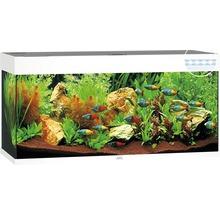 Aquarium-Komplettsets