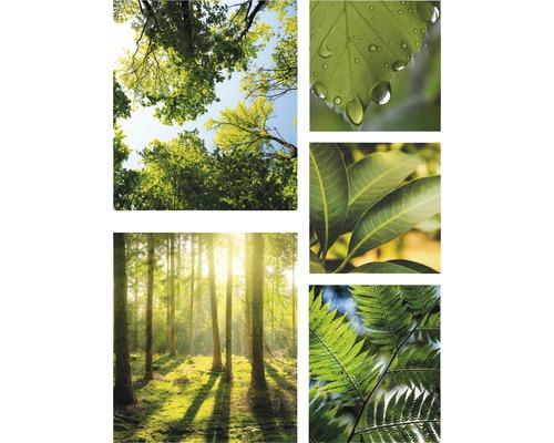 Leinwandbild Pure Nature 5er Set