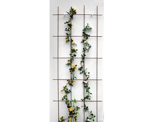 Gitterspalier 60 x 150 cm, braun