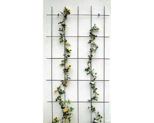 Gitterspalier 75 x 150 cm, braun