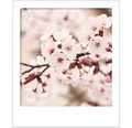 Premium Wandfarbe Style Color SELECTION 14 konservierungsmittelfrei Japanische Kirschblüte 2,5 L